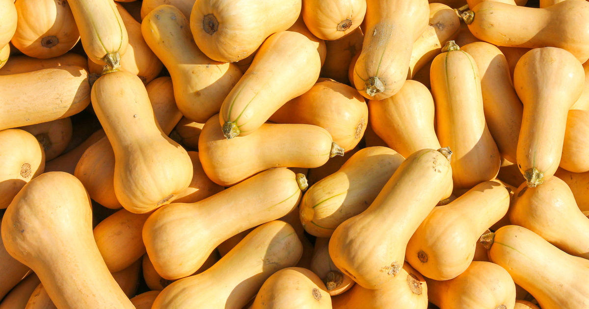Growing Butternut Squash In South Australia
