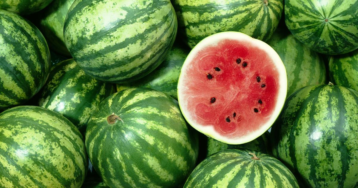 Growing Watermelons In Queensland